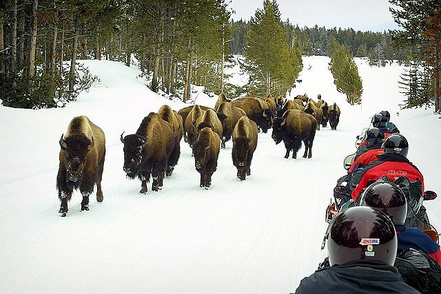 Old Faithful Snowmobile Tours Jackson Hole Wy Central Reservations