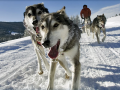 Jackson Hole Iditarod Sled Dog Tours